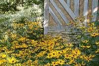 Les jardins du Pays d'Auge, visite à Cambremer