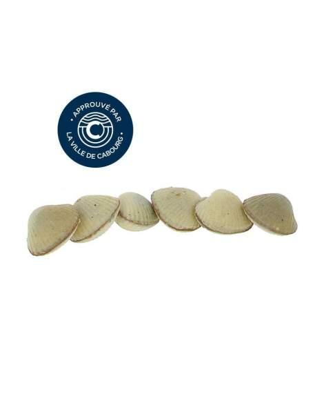 Réglette 6 coques de Cabourg chocolat fleur de sel 73 gr